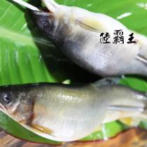 ☆母香魚☆ 爆卵 爆蛋母香魚 7入/包【 陸霸王】