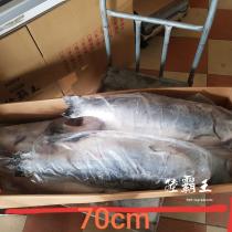 【免運】☆帶頭頂級銀鮭魚☆PREMIUM頂級鮭魚 生魚片店家專用 整隻鮭魚批發 【陸霸王】