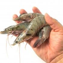 ☆4號白蝦禮盒☆鮮甜大白蝦850G 約24~32隻 【陸霸王】