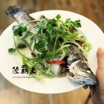 現殺鱸魚(整隻)  500g±50/隻 全新生活  金目鱸【陸霸王】