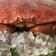 【5/16前買3送1再免運 下殺$674/隻 共4隻】巨無霸黃金霸王蟹 熟凍 麵包蟹 超級螃蟹 每隻重800~1200G 爆卵人氣推薦 【陸霸王】